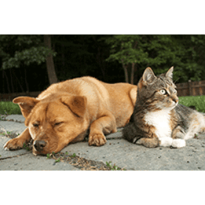 Vaccinate Pets Against Rabies