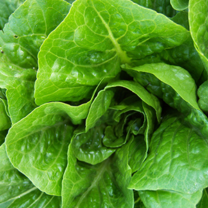 Local Cases of E. coli Linked to National Romaine Lettuce Outbreak