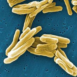 Tuberculosis Treatment for Health Care Providers